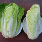 娃娃菜(Baby Cabbage)