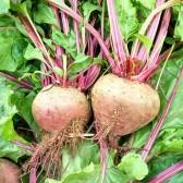 甜菜根(Beet Root)