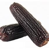 黑色糯玉米(Black Sticky Corn)