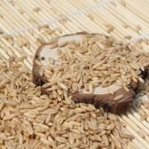 有机燕麦米(Organic oats)