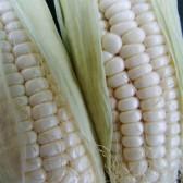 白糯玉米(Fresh Sticky Corn)